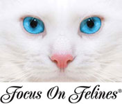 Focus on Felines Professional Grooming Products for Cats