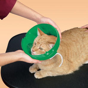 Smart Practice Green E-Coller for Cats and small dogs